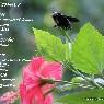 Kumbang Tersangkar